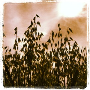 Havre i motljus Instagram