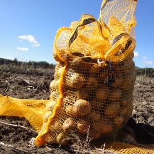 Potatis i 25 kg säck